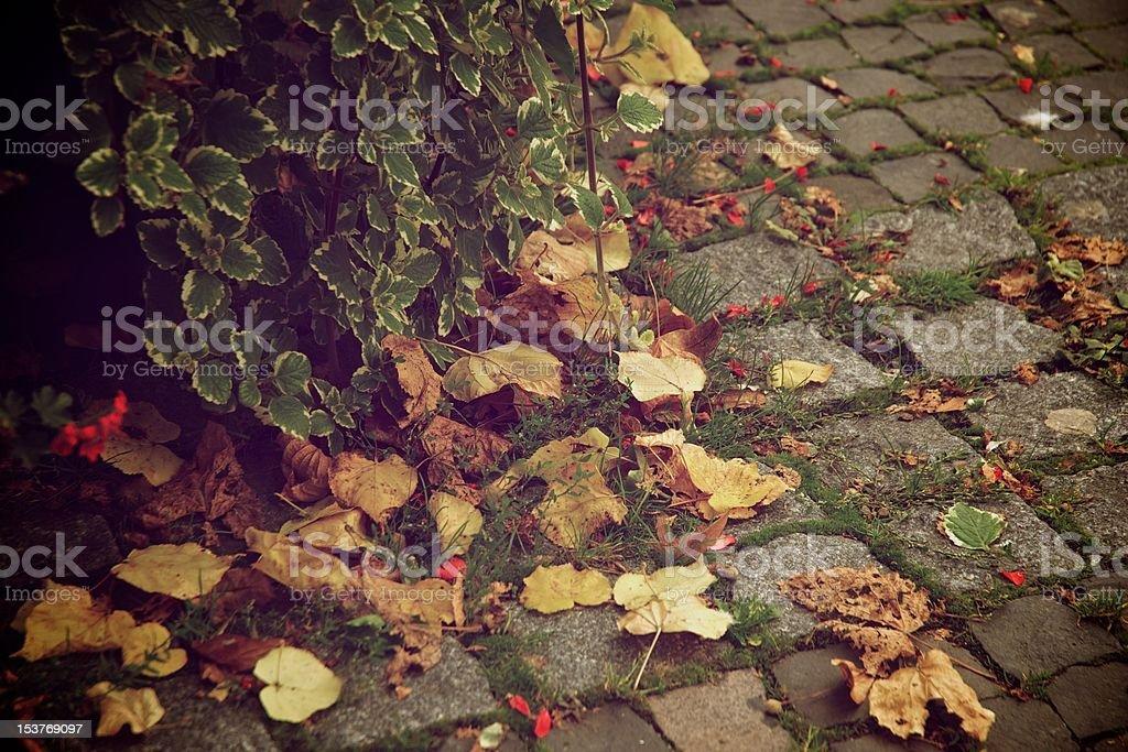 Autumn falling down stock photo