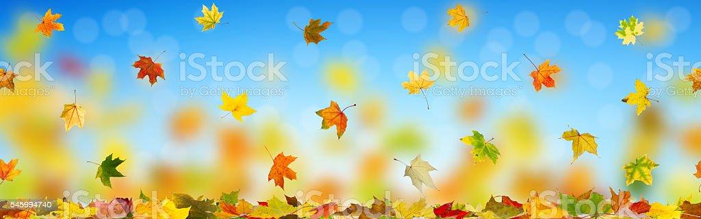 Autumn falling leaves stock photo