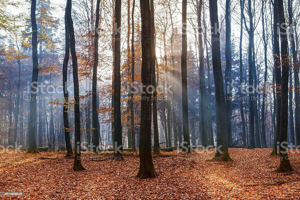 Autumn feel royalty-free stock photo