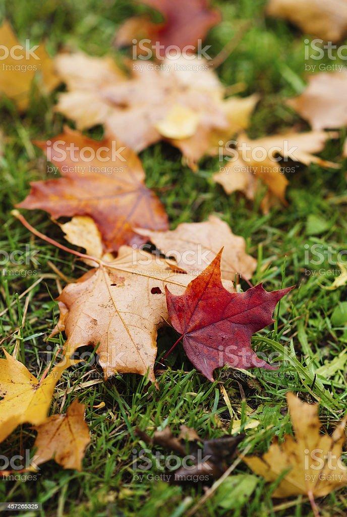 Autumn feeling leaves royalty-free stock photo