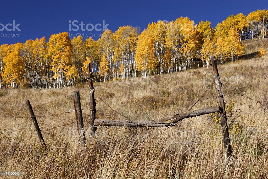 Autumn Field with Fence, Golden Aspen, and Clear Blue Sky royalty-free stock photo