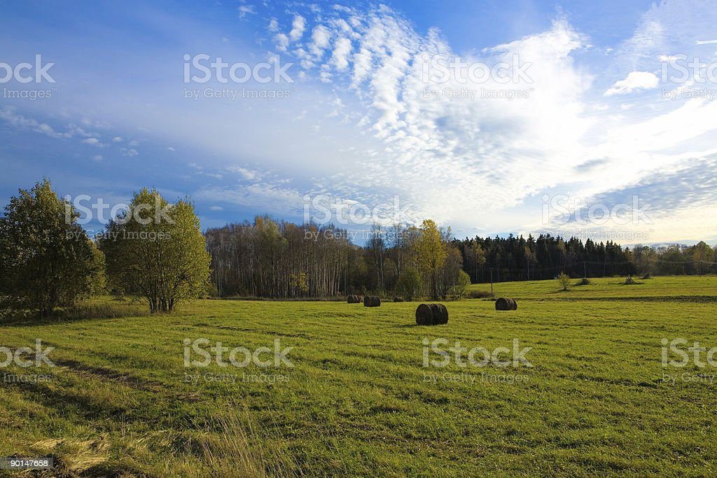 Autumn field with ties stock photo