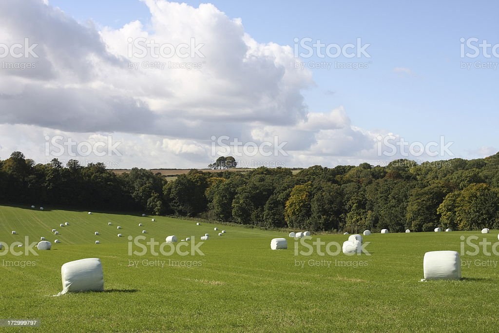 Autumn Fields after baling royalty-free stock photo
