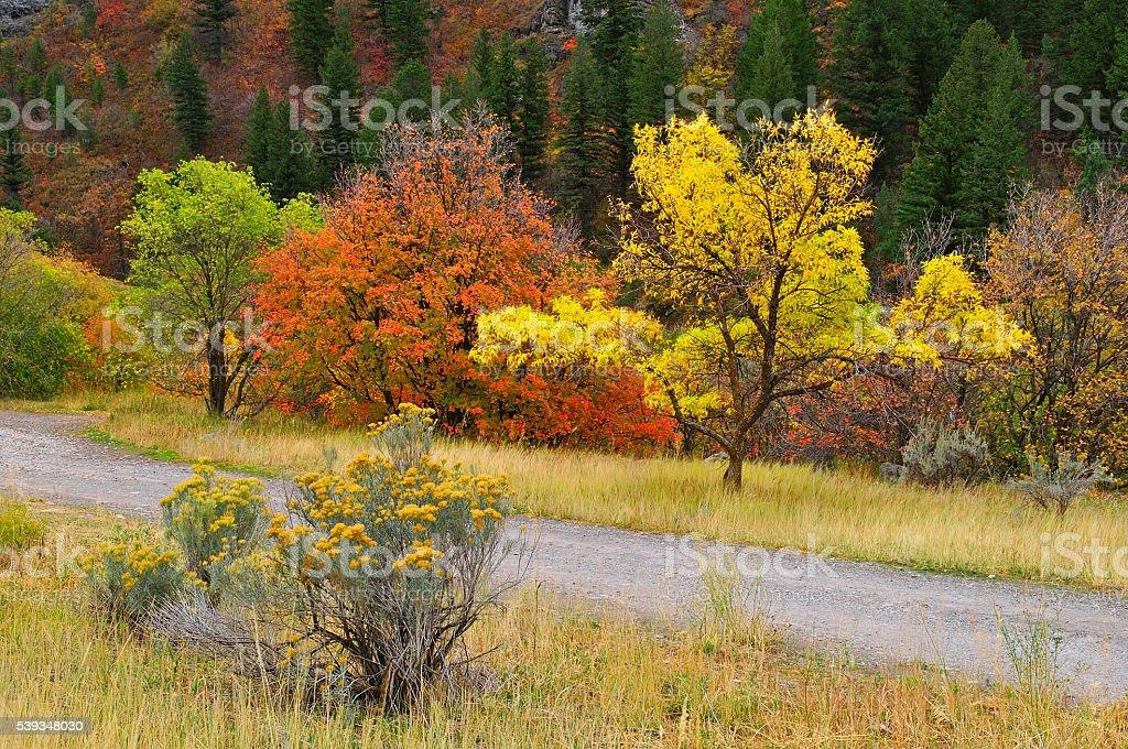 Autumn Flames stock photo