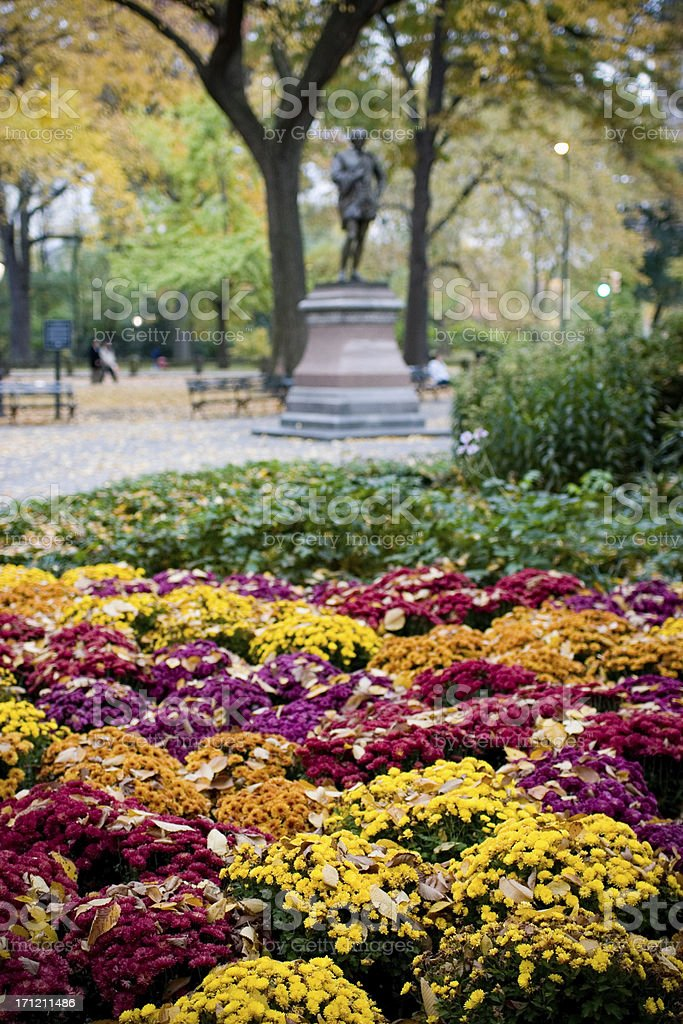 Autumn Flowers in Central Park NYC stock photo
