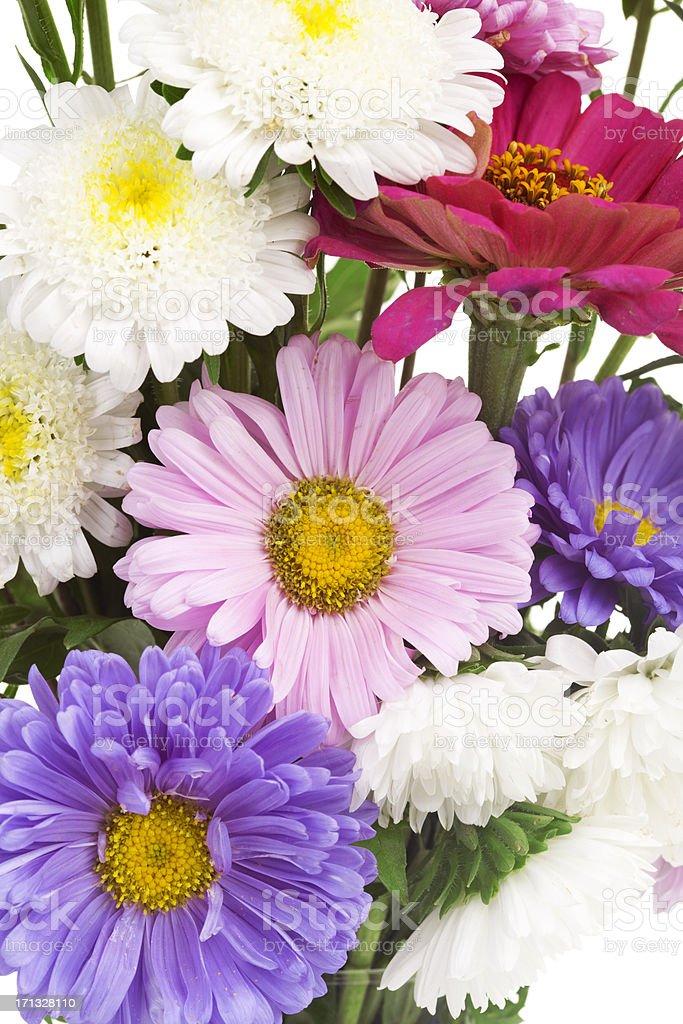 autumn flowers royalty-free stock photo