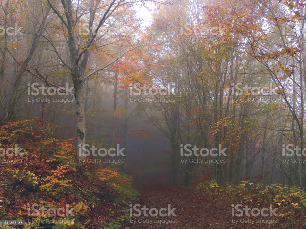 Autumn: Fog in the Forest stock photo
