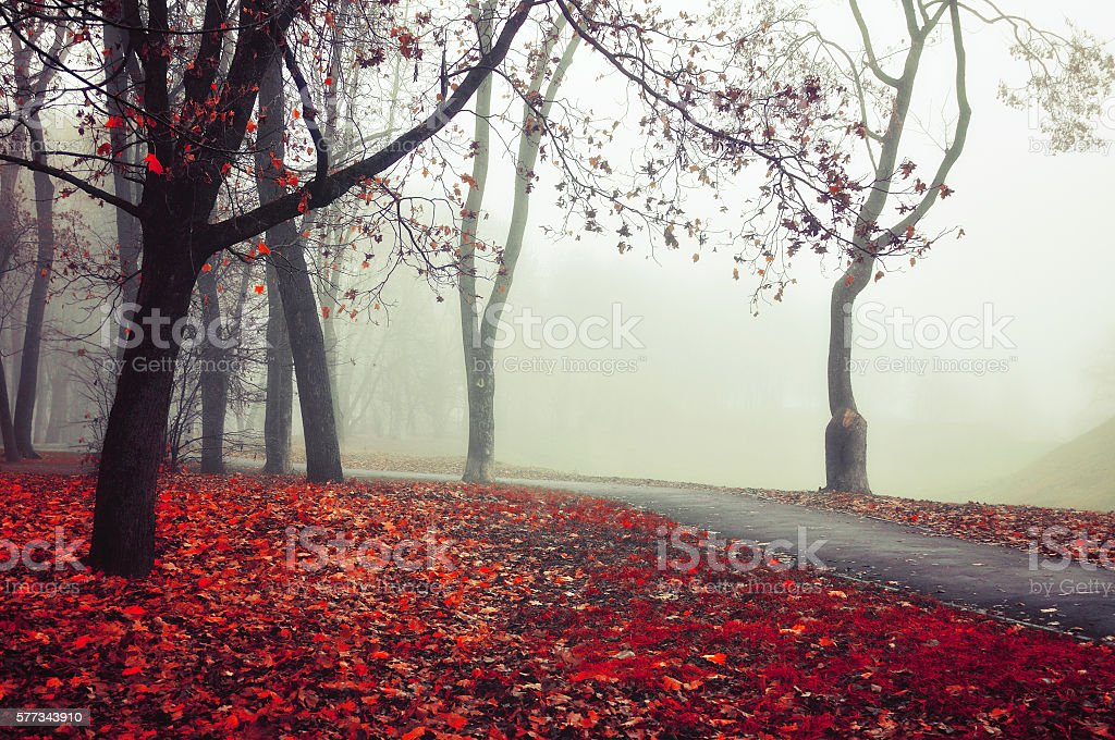 Autumn foggy alley - beautiful autumn landscape stock photo
