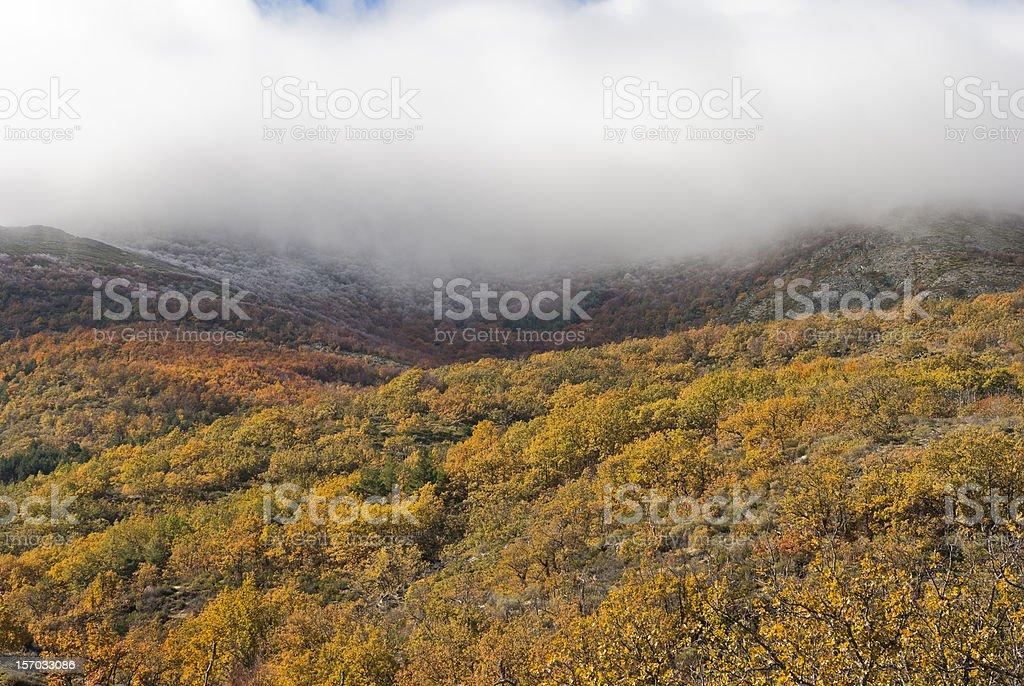 Autumn. bosque de niebla - foto de stock