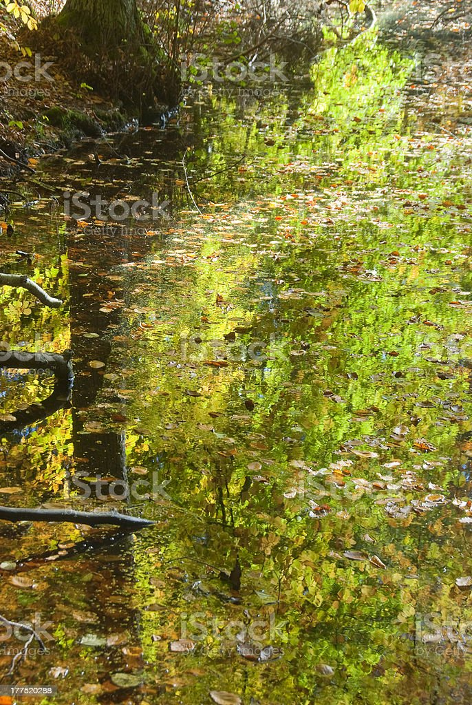 Autumn foliagé reflection stock photo