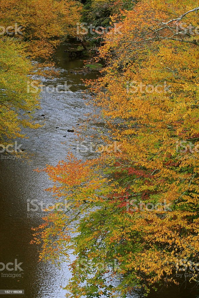Autumn foliage and Blue River royalty-free stock photo