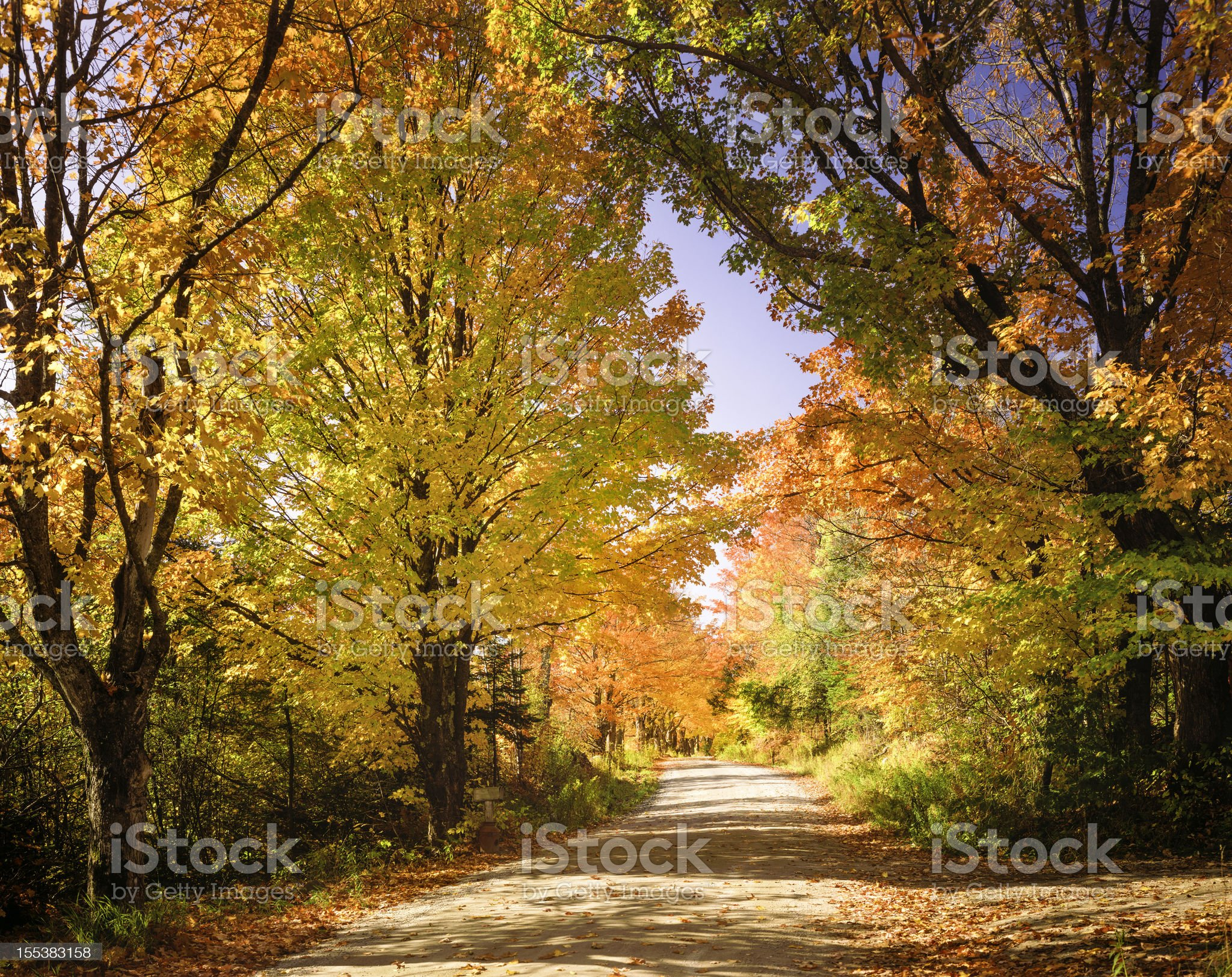 autumn foliage and country lane royalty-free stock photo