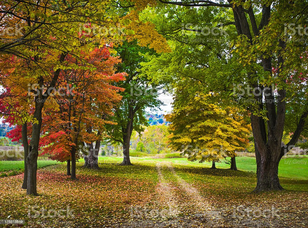 autumn foliage and country lane royalty-free stock photo
