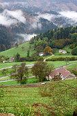Autumn foliage in Asiago high plateau. Veneto. Italy.