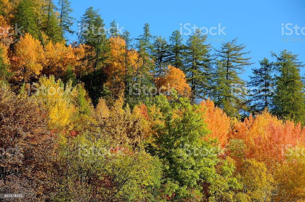 Autumn foliage in Valle di Aosta, Italy stock photo