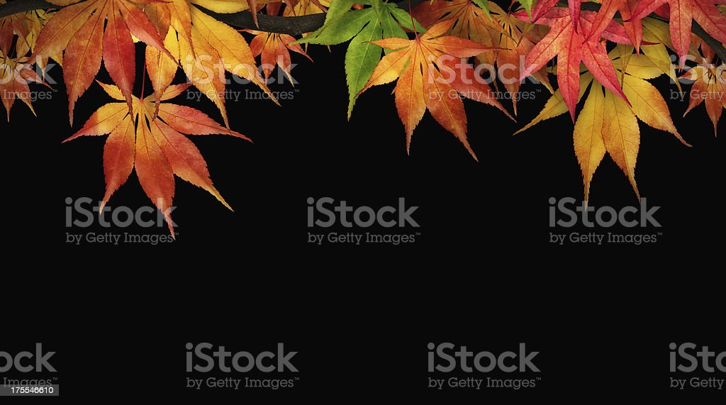 Autumn Foliage On Black royalty-free stock photo