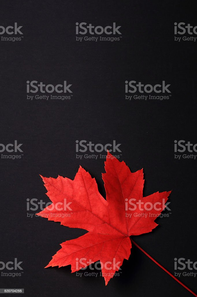 Autumn Foliage On Black stock photo