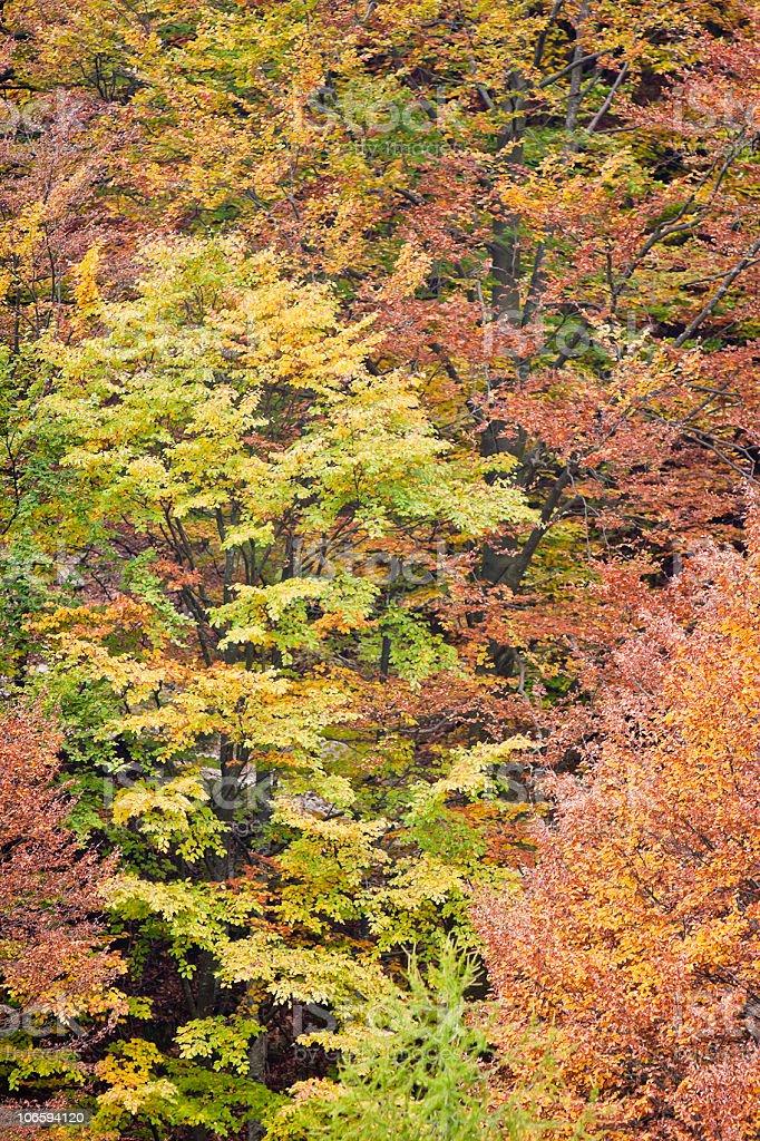Autumn Foliage on Monte Baldo royalty-free stock photo