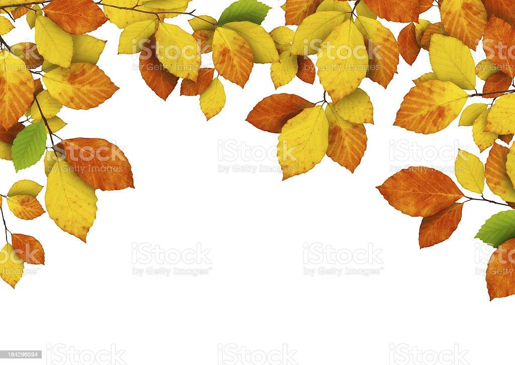 Autumn Foliage On White royalty-free stock photo