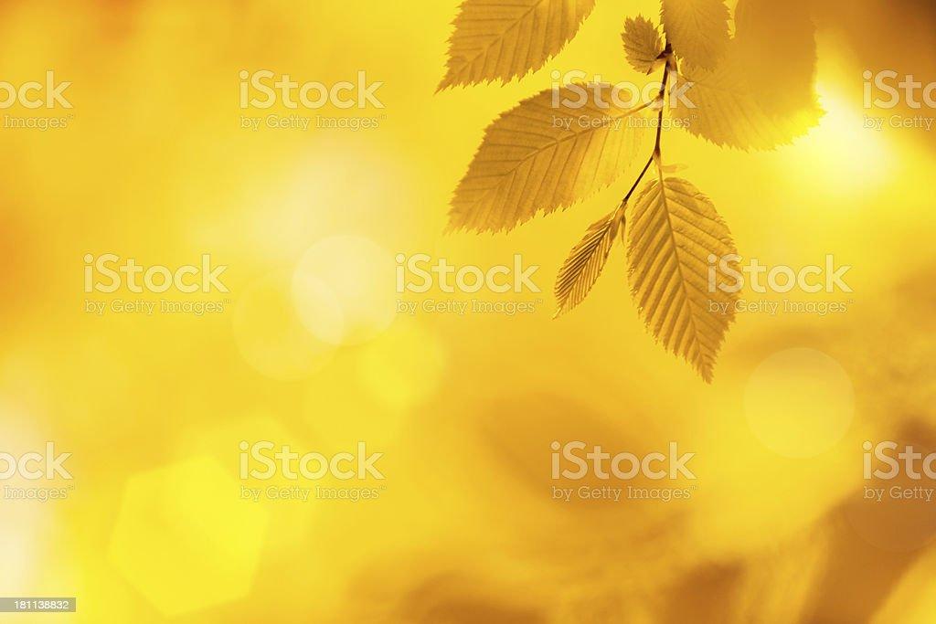 Autumn Foliage royalty-free stock photo