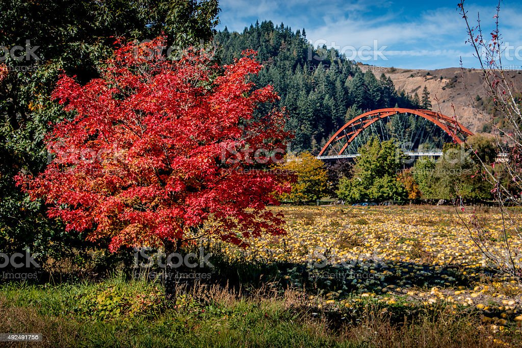 Autumn Foliage Sauvie Island Bridge Portland Oregon Fall Squash Field stock photo