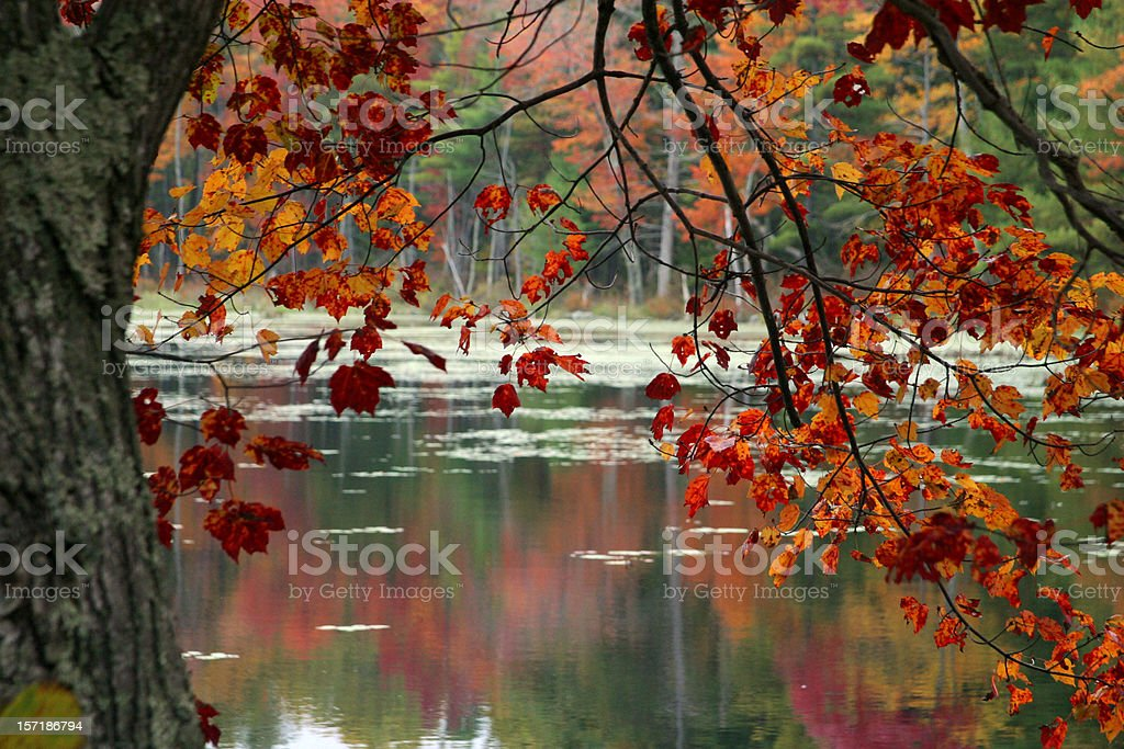 Autumn foliage with lake in the background royalty-free stock photo