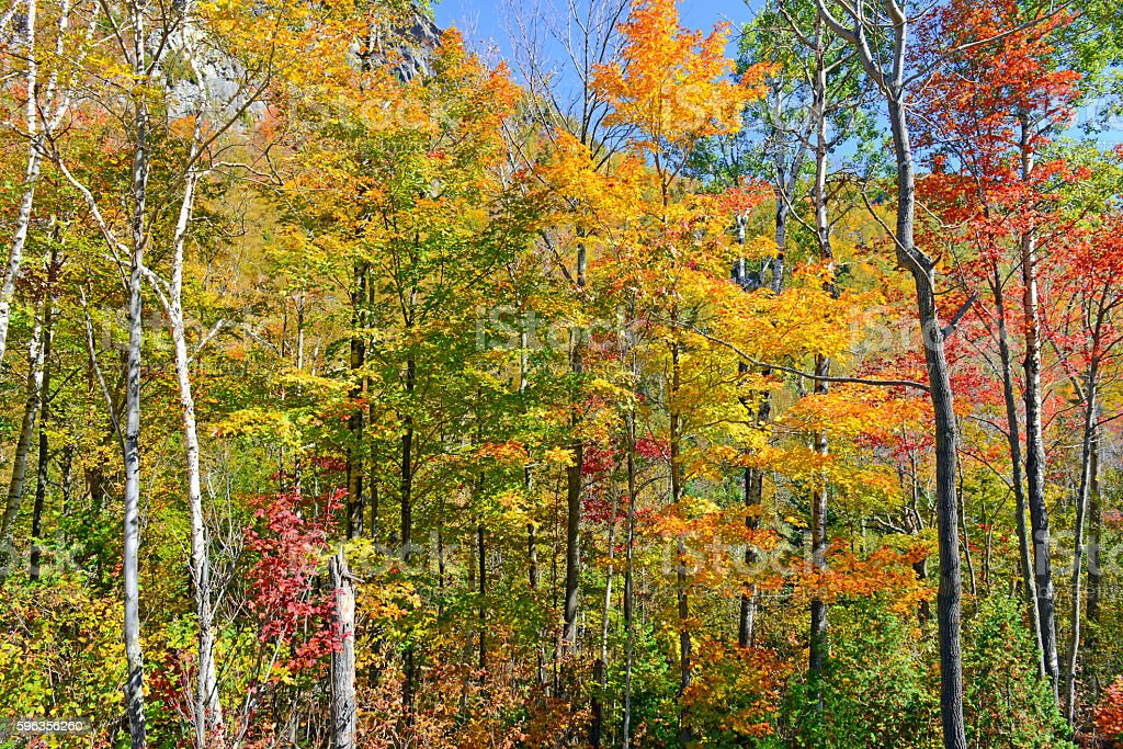 Autumn foliage, with red, orange and yellow colors, New York stock photo