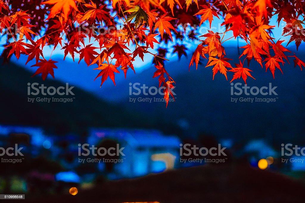 Autumn foliage with twilight background stock photo