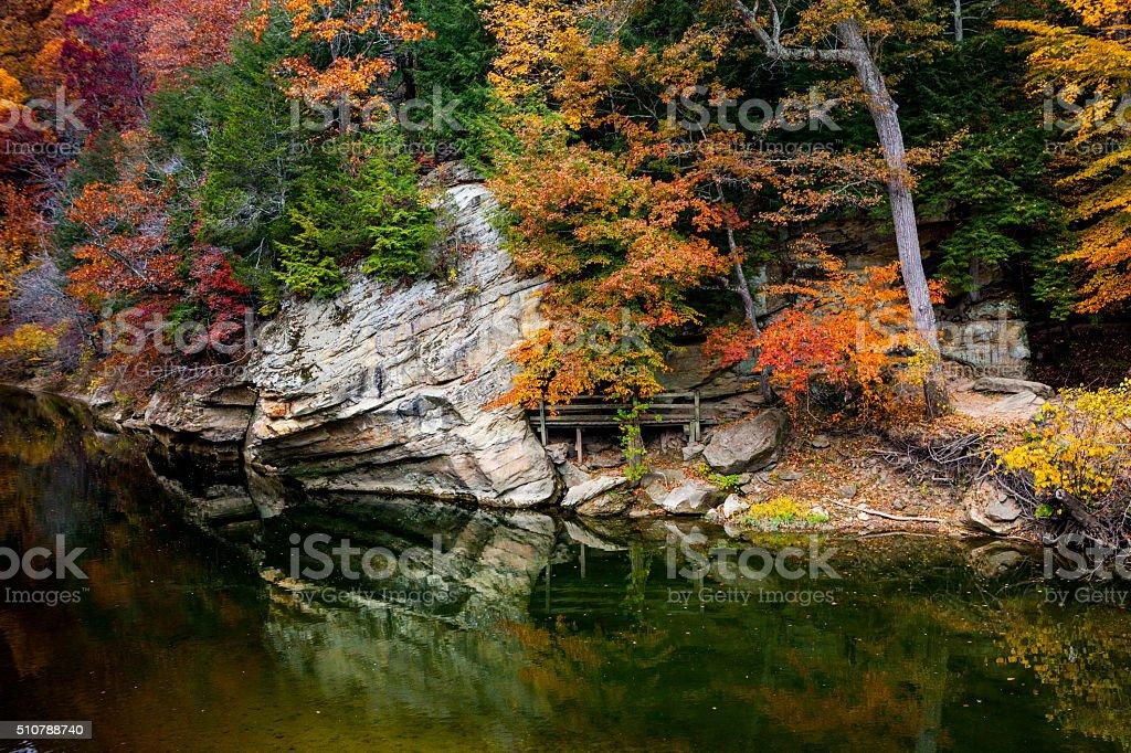 Autumn Folige stock photo