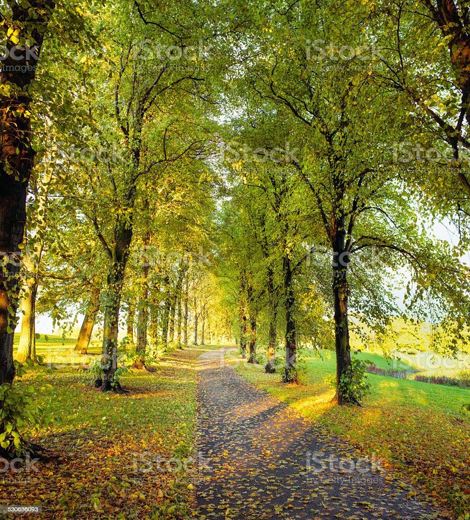 Autumn footpath stock photo