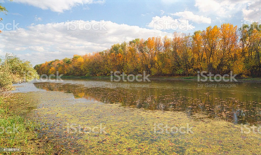 Autumn forest along the stagnant water. Astrakhan region, Russia stock photo