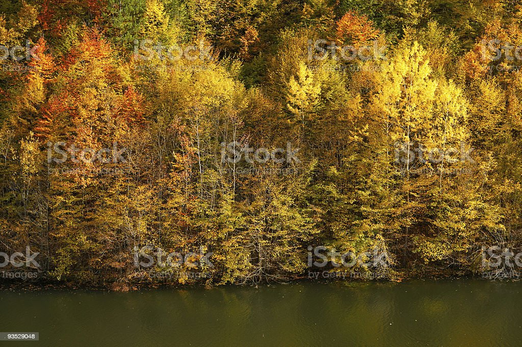 Autumn forest and lake shore stock photo