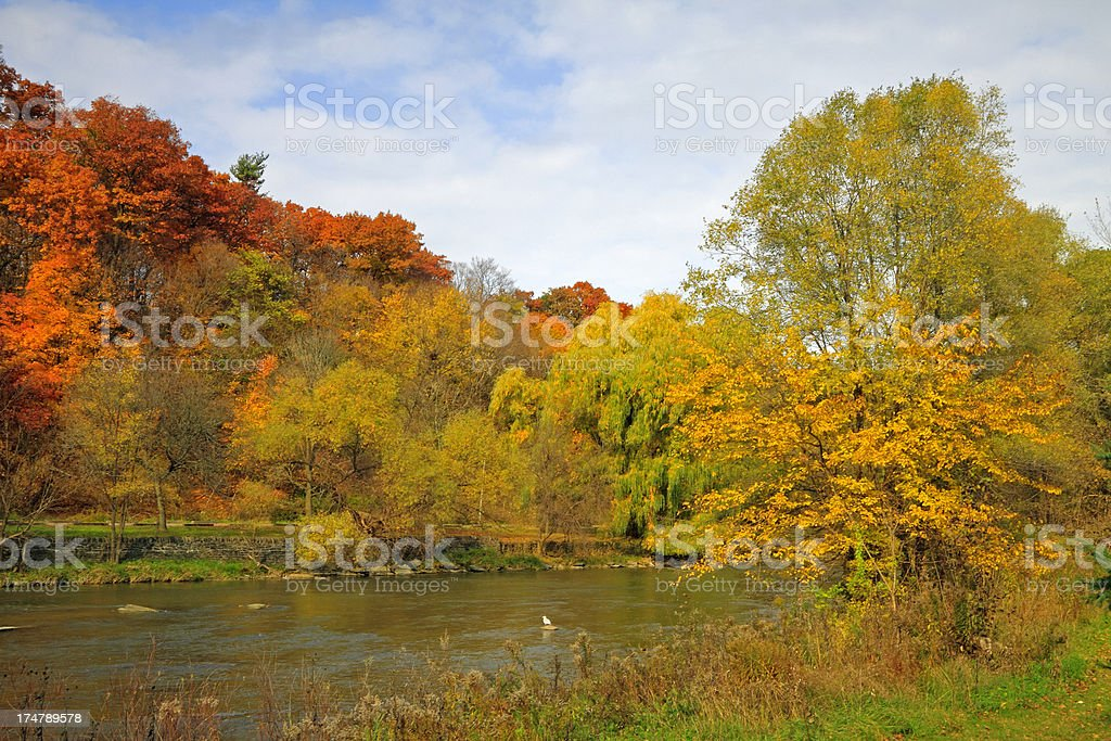 Autumn Forest and River royalty-free stock photo