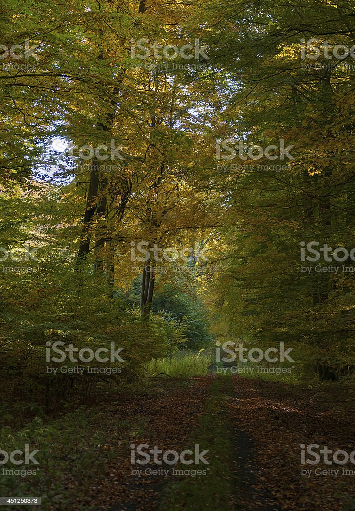 Autumn forest and road royalty-free stock photo