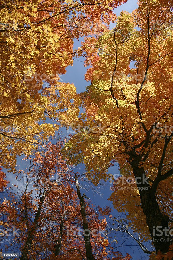 Autumn Forest and Sky royalty-free stock photo