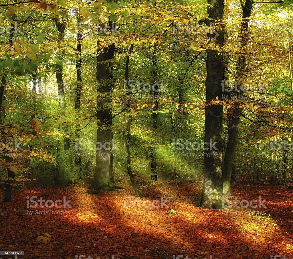 Autumn forest - beautiful colors of fall stock photo