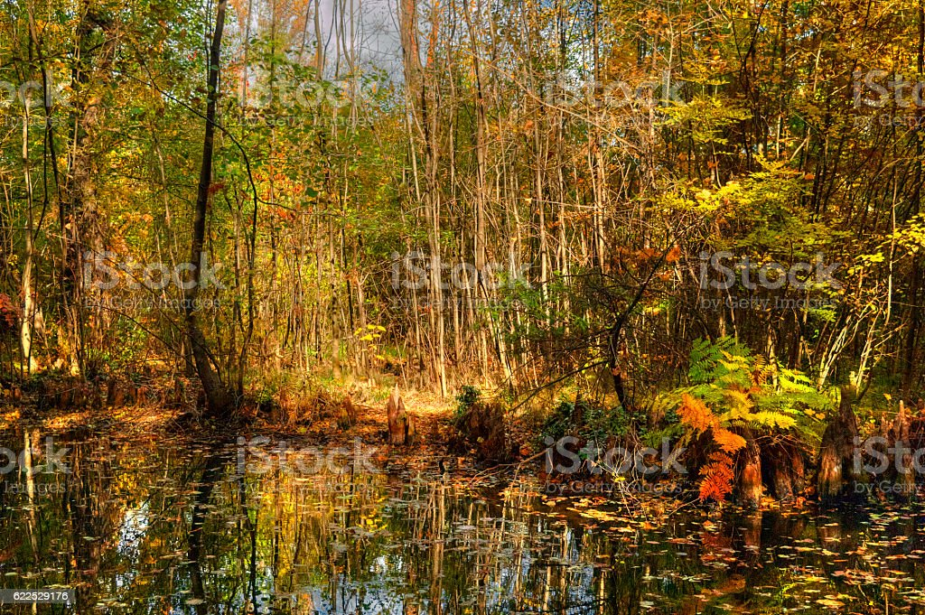 Autumn Forest Bog With Standing Water stock photo