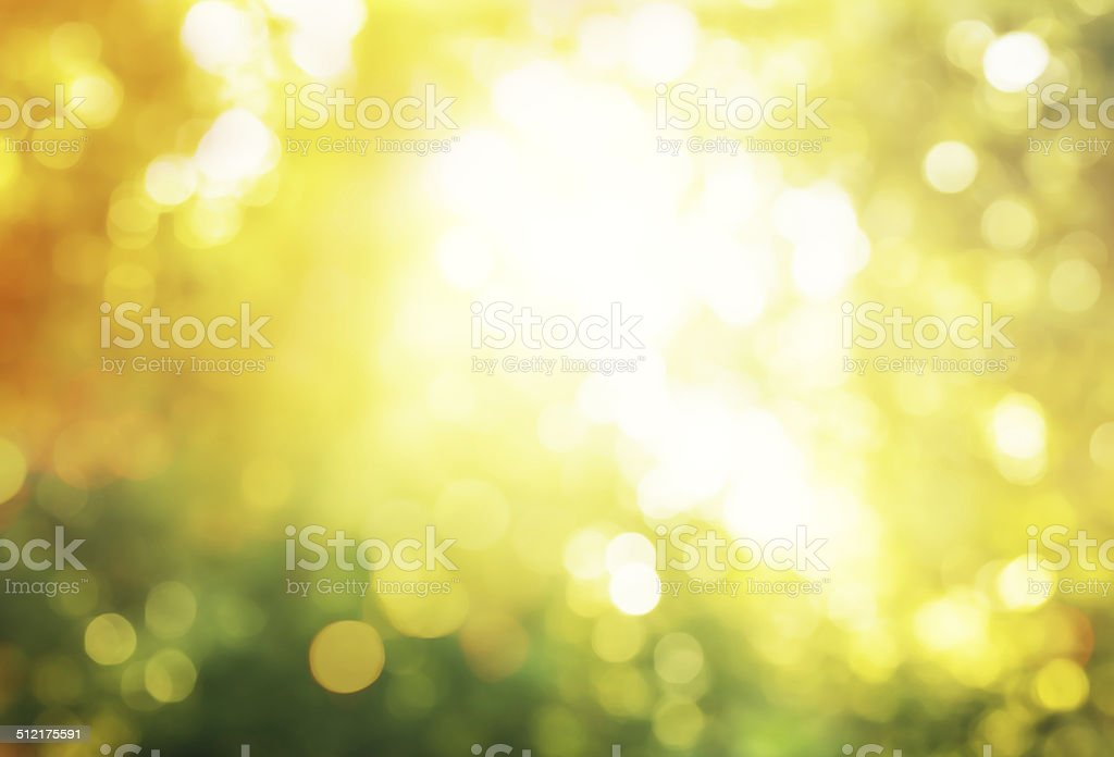 autumn forest bokeh stock photo
