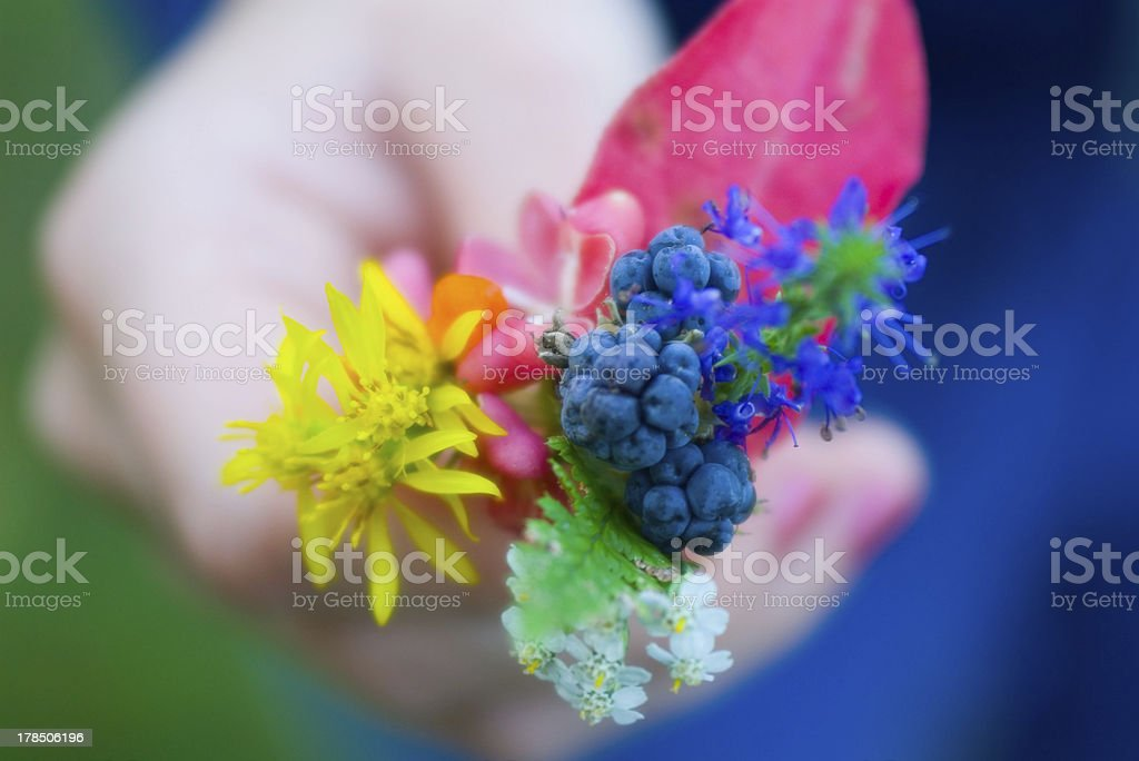 Autumn forest bouquet in child hand close-up royalty-free stock photo