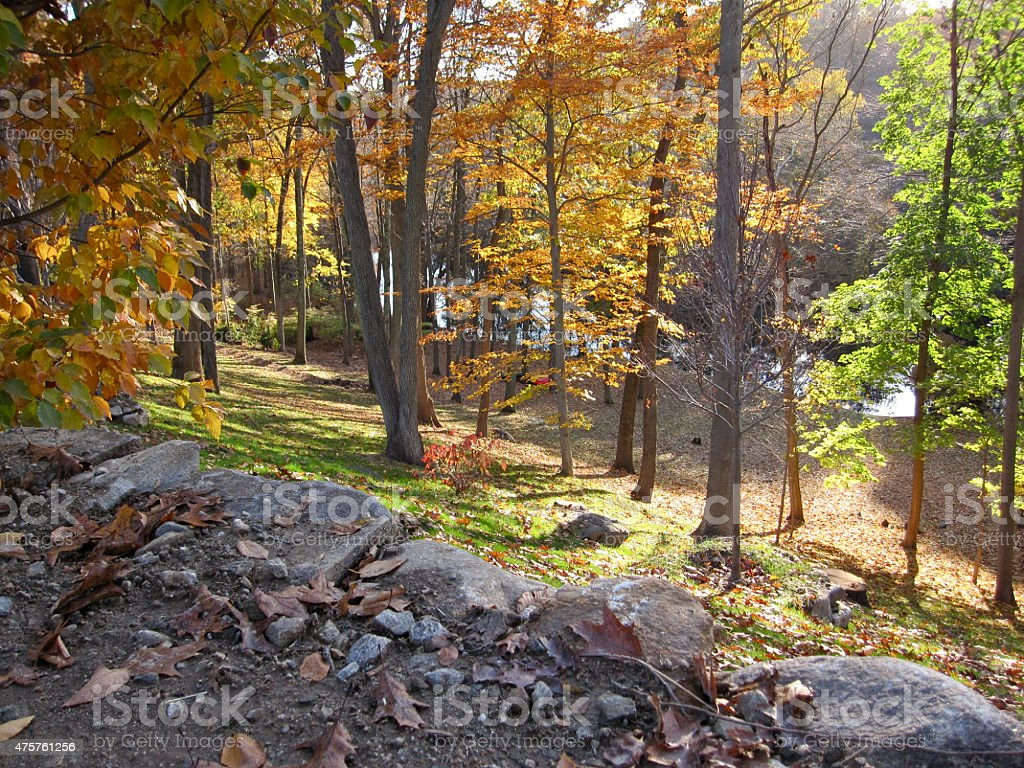 Autumn Forest by a River stock photo
