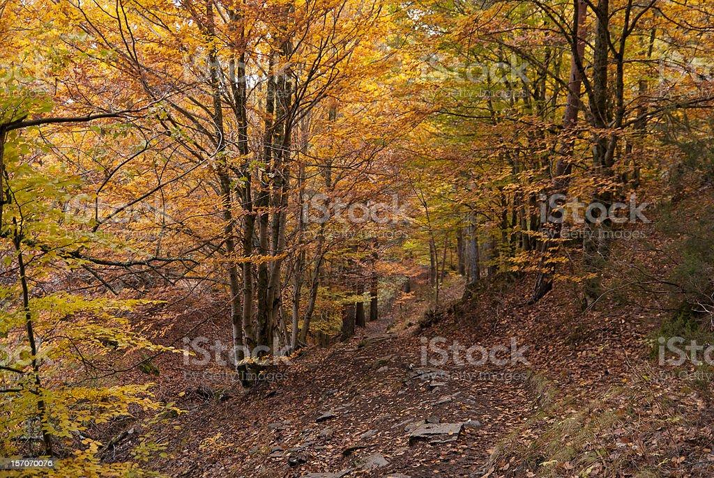Bosque de otoño. Al atardecer - foto de stock