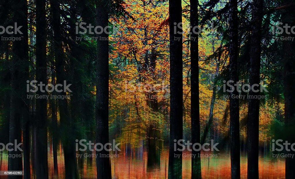 Autumn forest, Elati Greece stock photo
