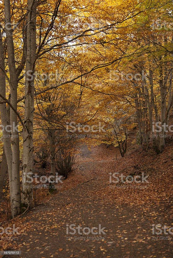 Bosque de otoño. Caída. Al atardecer - foto de stock