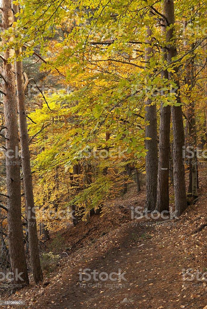 Bosque de otoño. Caída - foto de stock