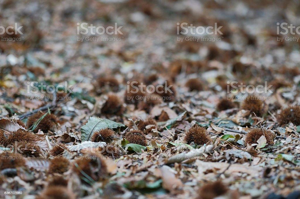 Autumn forest ground stock photo