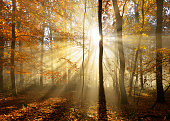 Autumn Forest  Illuminated by Sunbeams through Fog, Leafs Changing Colour
