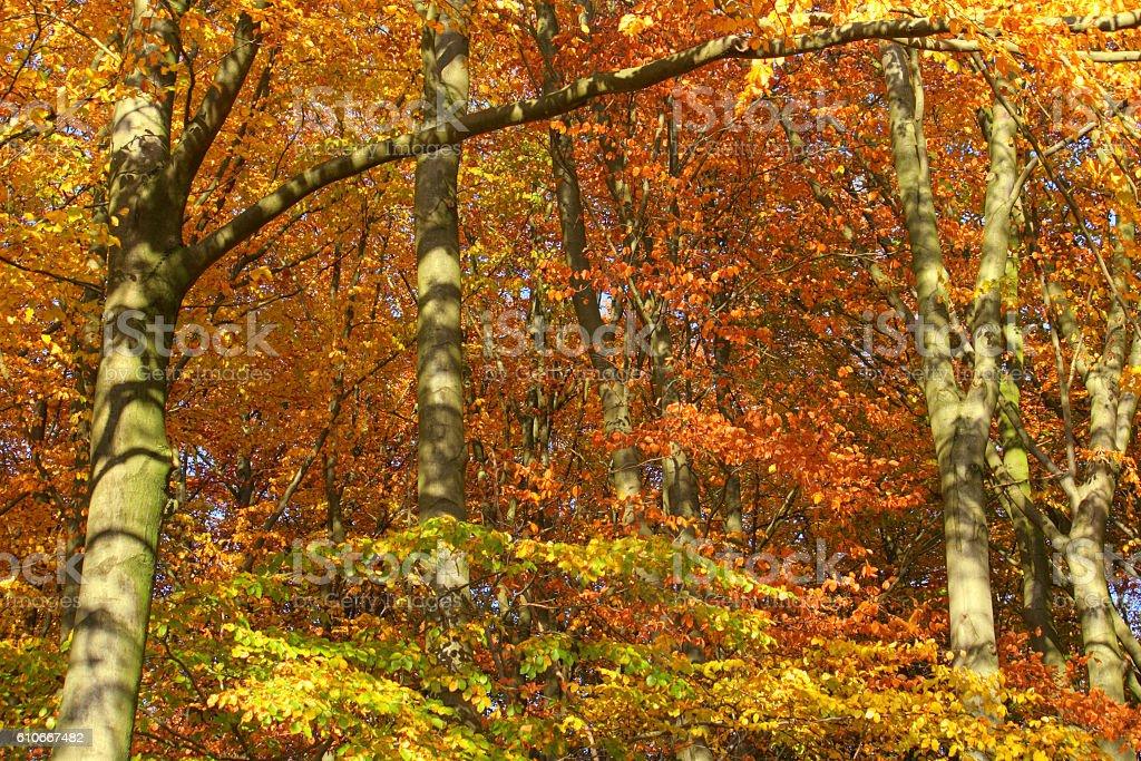 Autumn Forest in the Lüneburger Heide. stock photo