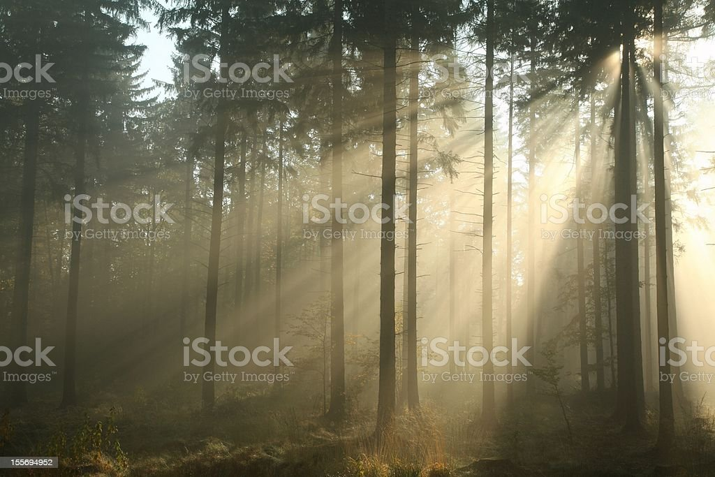 Autumn forest in the morning stock photo