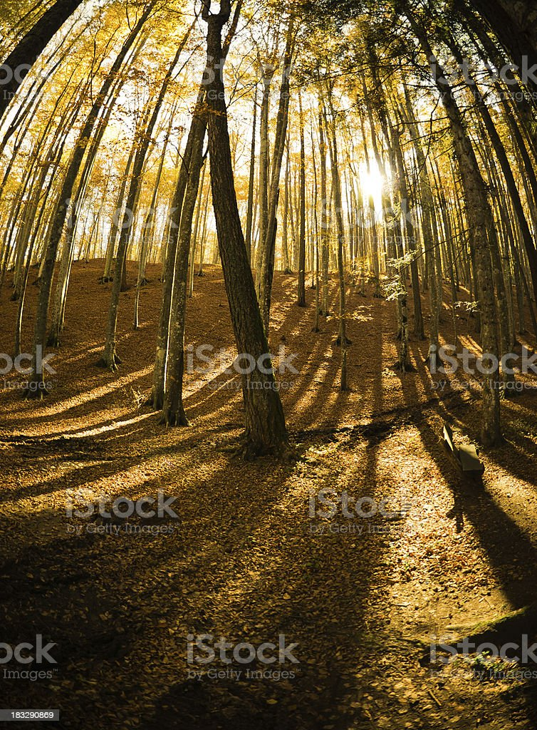 Autumn Forest in the mountain royalty-free stock photo