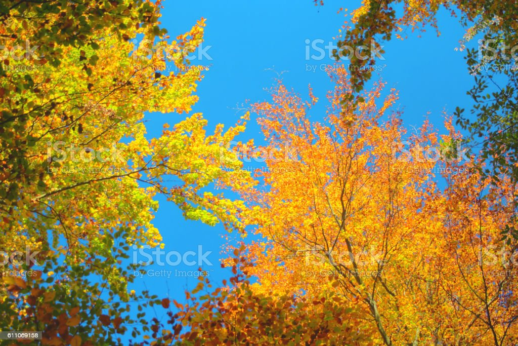 Autumn Forest in the Weserbergland stock photo